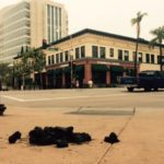 Santa Ana Police Horses Keep Pooping in Downtown–And Police Don't Clean Up