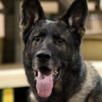 Bruno the Police Dog Becomes Prosecution Star Witness During Alleged Anaheim Cop Killing Trial