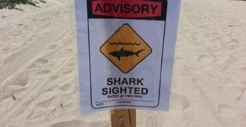 Shark Video Leads to Seal Beach Warning Signs. Does Shark Beach Have Seal Warning Signs?