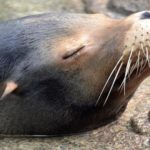 Weekender Updater: Of Sea Lions, Serial Killers, Homeless Shelters and Fired Principals