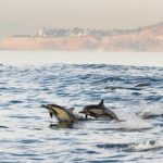 Navy Sonar Pact with Federal Agency Violated Law and Harmed Marine Mammals: Judge