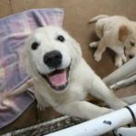 Weekender Updater: Of Animal Shelter, a Thief, Groundwater, Water Refunds and More