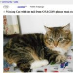 Oregonians Hope Someone in Garden Grove Has Seen Their Beloved Cat Lady Maude