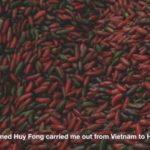 This Is How Huy Fong Sriracha Is Made: VIDEO