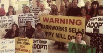 Is Lawsuit Against Barkworks Aimed at Improving Pet Stores or Generating Press?