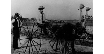 For the Birds: Orange County Was Once the Ostrich Capital of the Nation
