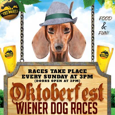 Dachshund Wiener Dog Races during Oktoberfest