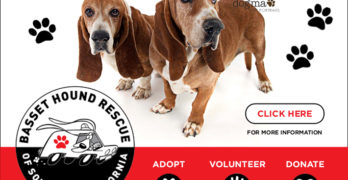 Basset Hound Rescue of Southern California Presents: Bids & Bites for Bassets!