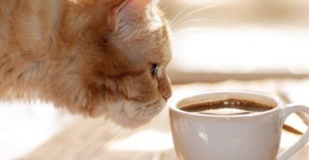 Now Open: A cafe where you can pet cats in Laguna Beach, and MORE!